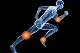 Muscular y óseo